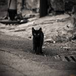 ((bold))Streunergruppe:((ebold)) Boss: ((bold))Blut((ebold)) - kleine, dunkelrote Kätzin mit einer weißen Pfote und gelben Augen (Jägerin) Stellver
