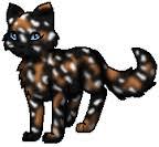 Warrior Cats Fakten 6