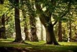 ((bold))HIMMELCLAN((ebold)) ((unli))Territorium:((eunli)) • ein hübscher, lauschiger Laubwald mit sehr vielen entweder ungewöhnlich flachen oder u
