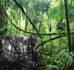 ((bold))DAS ORDENS-HAUPTQUARTIER((ebold)) ... liegt außerhalb der Territorien, in einem kleinen, werworrenen Gehölz voller alter, krummer Bäume und