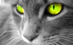 Warrior Cats Quiz/ Staffel 4