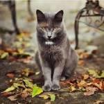 CATS: Hauskatzen No 1