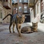 Katzen außerhalb der Clans: JULE: Eine blaugraue Kätzin mit schwarzen Pfoten; ein Hauskätzen