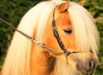 (Sehr einfach)! Wie heißen die Pferde von BuT? ;) #zueinfach