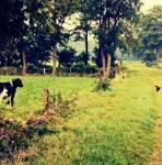 Der ((bold))Kuhrort((ebold)) befindet sich auf dem FrostClan-Gebiet. Dort wohnen Zweibeiner mit ihren Kühen. Außerdem lebt dort Lorry, ein Hauskätz
