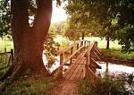 Fangen wir am Besten bei der ((bold))alten Brücke((ebold)) an. Sie liegt an der Grenze von Sturm- und FrostClan und ist, wie der Name schon sagt sehr