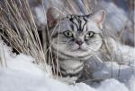 Welche Katze ist noch in dich verliebt? EisClan Test Teil 2