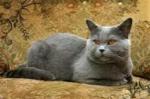 Die Warrior Cats Namen - auf Englisch! Kannst du sie?