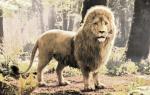 Immer wieder sagte eines der Kinder einen großen goldenen Löwen gesehen zu haben. Doch Susan dachte es sei ein Spiel. Eines Tages, es regnete in Str
