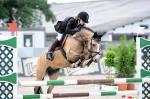 Welche Pony Rasse gibt es wirklich?