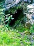 ((unli))SchattenClan Lager((eunli)) ((cur))Das SchattenClan Lager ist eine Kuhle die mit schlammigem Boden und dichten Sträuchern umgeben ist. Der Do