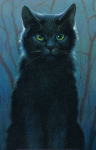((bold)) WindClan Katzen ((ebold)) ((cur))Die WindClan Katzen sind sehr loyal daher auch sehr oft beleidigt. Oftmals werden sie schwach bezeichnet nur