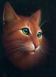 Fakten über Warrior Cats
