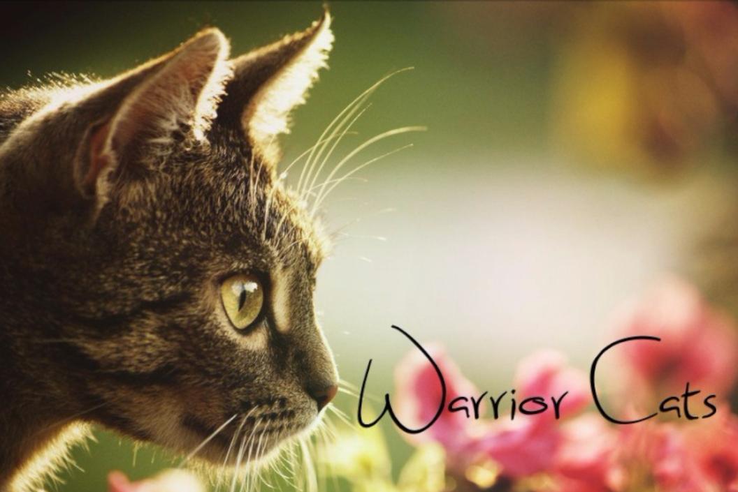 Warrior Cats Feuerclan