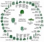 Hier ist der keltische Baumkreis.