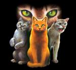 Also und noch die Hierarchie:) ((bold))Hierarchie:((ebold)) ((unli)) Anführer/in: ((eunli)) Schattenstern: Schwarz weiß gefleckt mit Eisblauen Augen