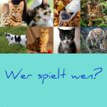 ((bold))Wer spielt wen? ((ebold)) ((bold)) Feuerschweif&co ((ebold)): Goldstern, Flammenjäger, Nebelherz, Feuerschweif, Kirschdorn, Rubinherz, Wasser