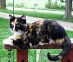 Name (bei BlutClan Streunername, bei Clan Clanname): Night Alter (bitte auch ältere und erfahrene Katzen): 26 Monde Aussehen (bitte ausführlich): gr