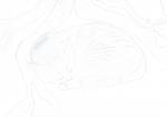 ((bold))Katzenverzeichnis((ebold)) ((cur))Aufzeichnung der wichtigsten Katzen in der Geschichte((ecur)): Nebelschatten: Ehemalige Zweite Anführerin a