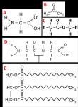Chemiefragen zu Estern, Fetten und Seifen