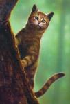 Warrior Cats -Persönlichkeitstest