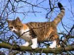 Warrior Cats - Das Abenteuer beginnt RPG