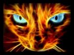 42. KAPITEL Silberstern stand auf dem Hochstein und blickte auf die versammelten Katzen hinab. Zwei Tage waren seit dem Treffen der Anführer und Heil