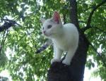 1. KAPITEL Vorsichtig eine Pfote vor die andere setzend näherte sich Fallende Feder der Maus. Sie fühlte den Blick ihrer Schwester Plätschernder Ba