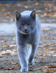 Warrior Cats- wie gut kennst du Blaustern?