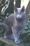 Blaustern und Tigerstern sind verwandt?