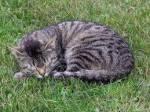 ((bold))Die Ältesten((ebold)) Regenbach: alter, dunkelgrauer Kater mit blauen Augen Baumlicht: alte braune Katze mit grünen Augen.