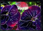 Giftpflanzen: 1. Status: sehr oft Fundort: In Flüssen Wirkung: benebelnd-Tod(je nach Konsistenz) Aussehen: wie pinke Algen Besonderheiten: Wasserpfla