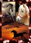 Bist du ein Pferde-Experte?