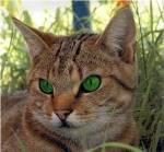 ((unli))Prolog((eunli)) Es war eine dunkle und kühle Nacht. Die Katzen des MoosClans schliefen alle, aber der Heiler Flügelschatten konnte nicht sch