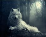 Name: Almoris Geschlecht: weiblich Alter: 5 Rudel: Fähenrudel Rang: Guardian Aussehen: silbernes, fast weißes Fell, veilchenblaue Augen Charakter: v