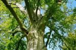 Die 10 schönsten Bäume