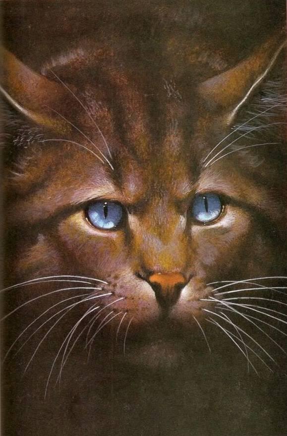 Warrior Cats Wer Bin Ich