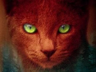 Warrior Cats Cats