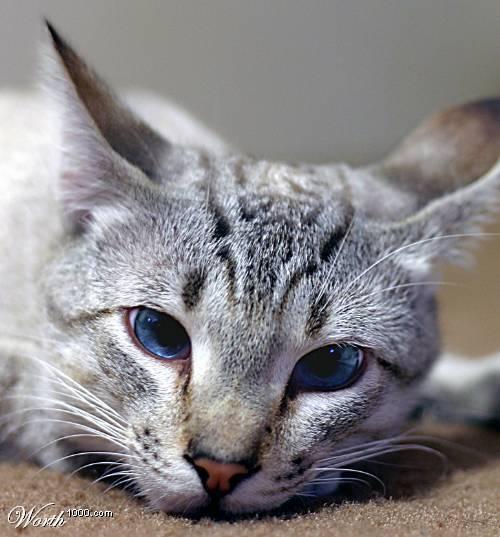 warrior cats der blick des heilers staffel 1 band 1. Black Bedroom Furniture Sets. Home Design Ideas