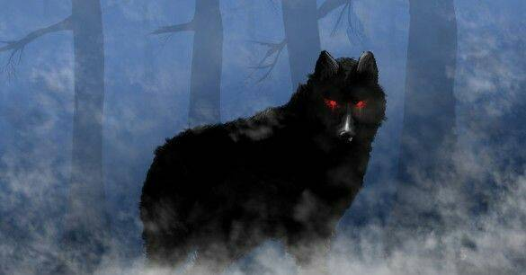 Wolfsrudel Steckbrief
