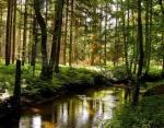 *Drossle mein Tempo wieder und laufe an einem Fluss vorbei* Das hier ist der Seelenfluss *...* Warum er so heißt? Eine alte Legende besagt dass die S