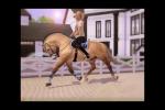 Rollkur ist Pferdequälerei