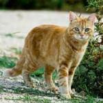 Warrior Cats - Wer bist du? (ausgedacht)