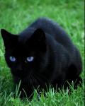 ((bold))((unli)) BlueDragon´s Nebencharakter: ((ebold))((eunli)) Name: Luna Geschlecht: weiblich Alter:17 Menschenjahre Art: Katze Aussehen: pechschw