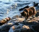 ((unli))((bold)) Katzen außerhalb der Clans: ((ebold))((eunli)) FUNKE(Funkensprung)-W-gold/Orange getigertes Fell mit einer weißen Pfote und grünen