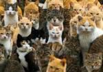 Hier ist der Link zum Rpg: http://www.testedich.de/quiz39/quiz/1453990810/Warrior-Cats-Fremde-Gefahren Wer ein anderes Bild möchte schickt Bitte den