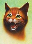 """Tigerstern vs. Feuerstern Meine Meinung: Ständig diese Zankereien """"Tigerstern ist (BEEP)"""" """"Feuerstern ist besser"""" oder umgekehrt."""