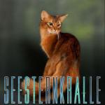((bold))((big)) Seesternkralle ((ebold)) ((ebig)) ((bold))((blue))Interpretation: ((ebold)) ((eblue)) Seesternkralle ist für mich eine Katze, die noc