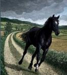 Das schöne schwarze Pferd mit der weißen Blesse.