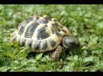 Eine Schildkröte. Lustig 😉